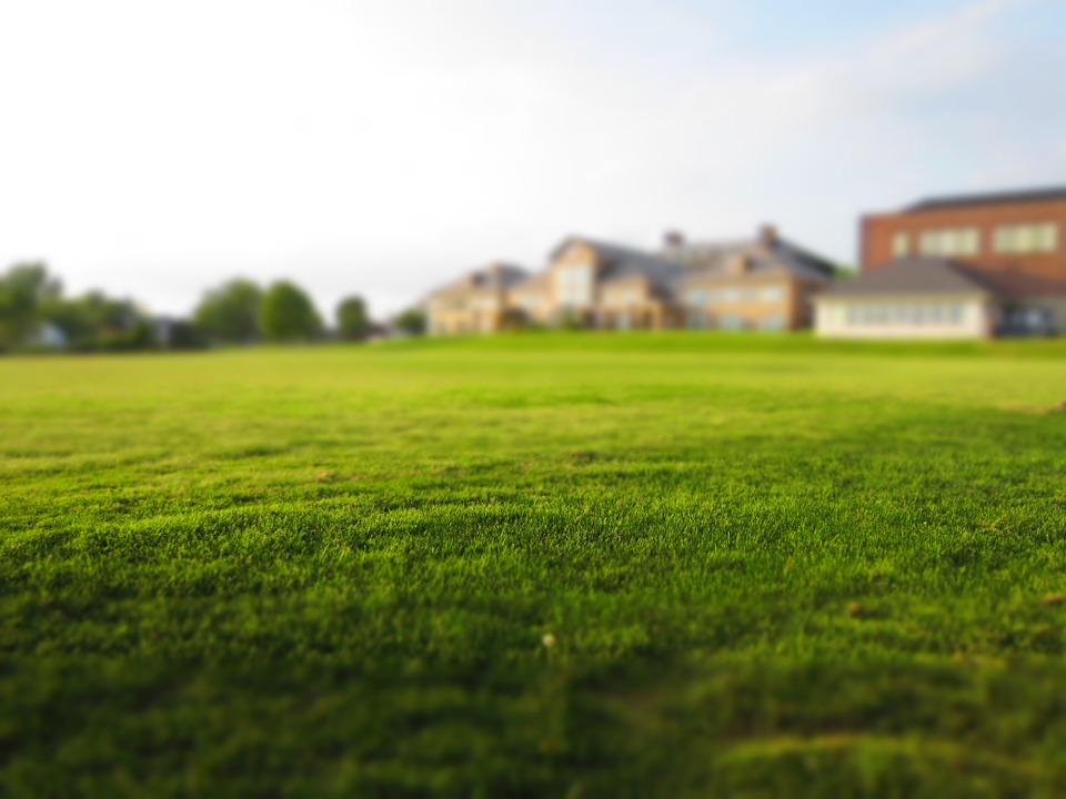 Will Watering Grass Make It Greener